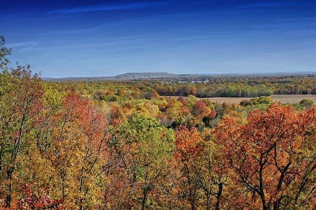 Arkansas Fall Trees
