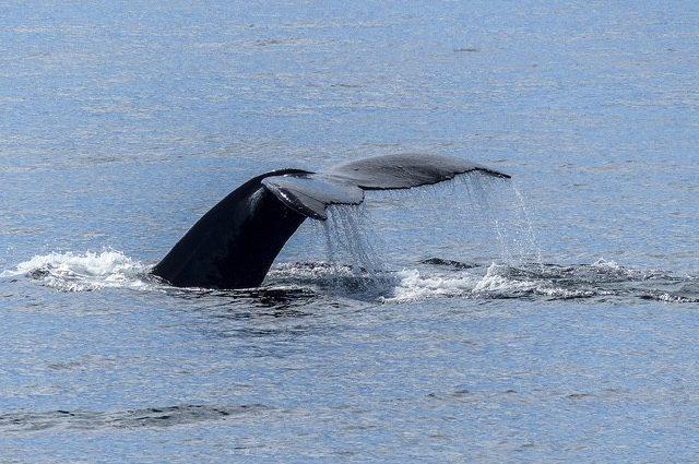 Whale Watching Puerto Vallarta Tour